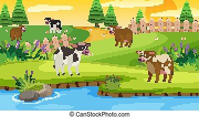 scène, champ, vaches
