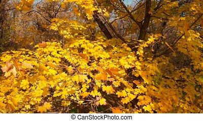 scène, fall., automne, automne, couleurs, forest.