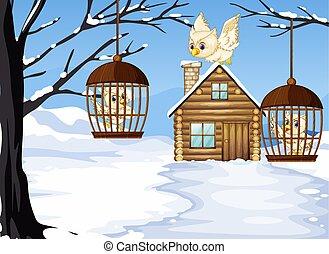 scène hiver, à, blanc, hiboux, dans, oiseau, cages