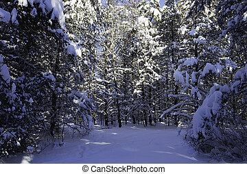 scène hiver