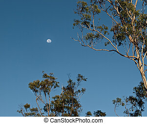 scène, matin, tôt, monture, australien, lune