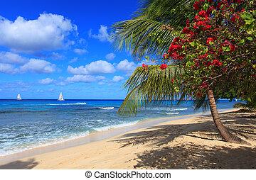 scène plage, barbade
