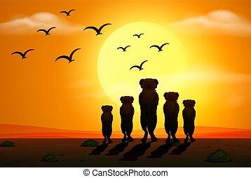 scène, silhouette, coucher soleil, meerkats