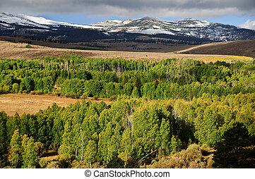 scénique, forêt, paysage vert, à, montagnes