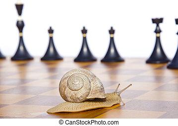 scacchiera, nero, scacchi, lumaca