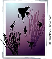 Scalare - Aquarium with silhouettes of fishes (scalare) and ...