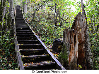 scale, foresta
