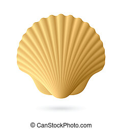 Scallop seashell - Vector illustration