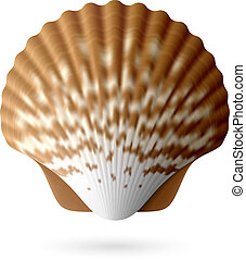 Scallop seashell illustration
