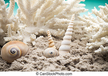 Scallop. - Shell and coral on the sand, the sea beach.