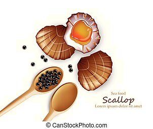 Scallop Vector realistic seafood. Fresh shellfish. 3d detailed illustrations