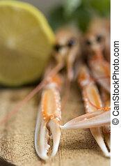Close up of fresh scampi