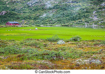 Scandinavian landscape with field