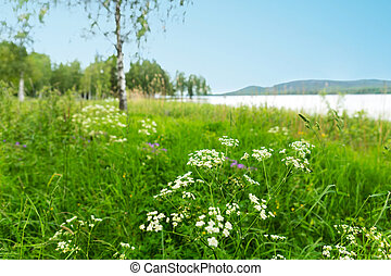 Scandinavian landscape with flowers, birch trees and lake in...