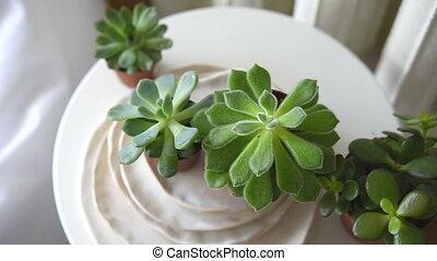 Scandinavian white interior home decor details, succulents...