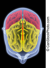 brain - Scanning of a human brain by X-rays. part of the...