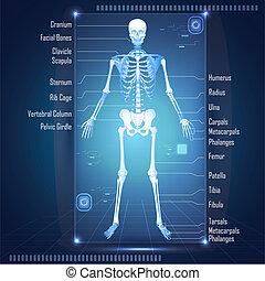 Scanning of Skelton - illustration of scanning of human ...