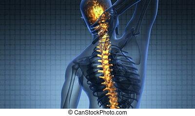 scansione, spina, scienza, spina dorsale, anatomia, Ardendo, umano, ossa, mal di schiena