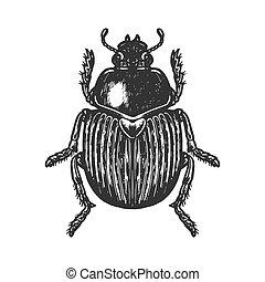 Scarab beetle engraving vector illustration. Scratch board...