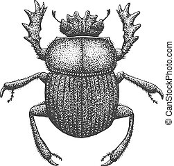 Scarab Engraving Illustration - Scarab - Classic Drawn Ink...