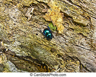 Scarab - A dung beetle beetle, Börzsöny is sunbathing in...