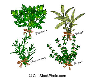 Scarborough Fair Herbs - An illustration of bunches of the...