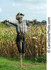 Scarecrow and corn field - A Scarecrow protecting a corn ...