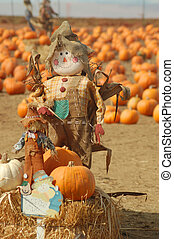 Scarecrow in a pumkin patch - a scarecrow on a bail of hay...