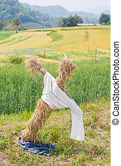 scarecrow in the wheat field
