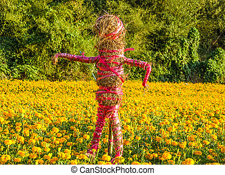Scarecrow of marigold field