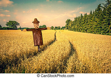 Scarecrow on a golden field
