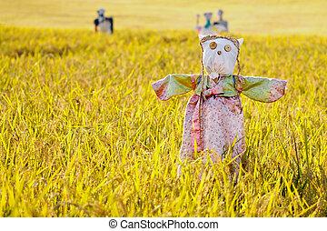 Scarecrow on the rice field during Chuseok, korean...