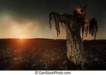 scarecrow pumpkin field