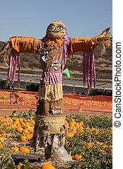 Scarecrow & Pumpkin Patch