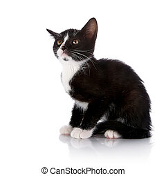 Scared Black and white kitten sits on a white background.