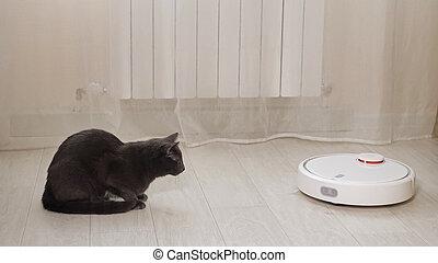 Scared black cat looks at robot cleaner hoovering floor