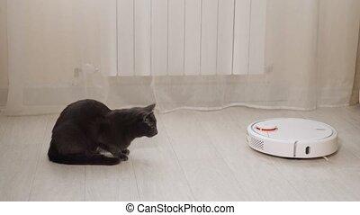 Scared black cat looks at robot cleaner hoovering floor - ...