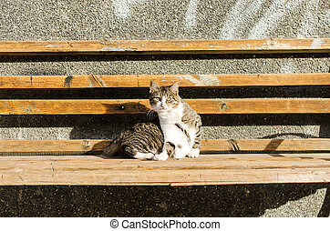 Scared cat on the bench