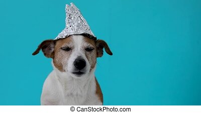 Scared dog in a foil hat - Paranoia scared dog in a foil hat...