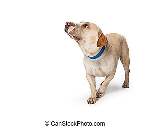 Image result for images of fearful dogs stock photos