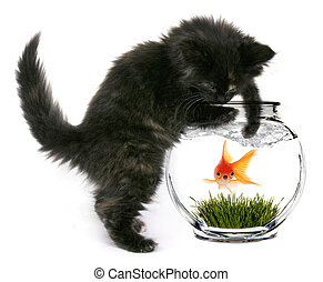 Scared Goldfish That Will Soon Be Eaten - Black Cat Reaching...