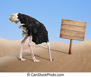 scared ostrich burying head in sand near blank wooden ...
