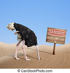 scared ostrich burying head in sand under danger sign -...