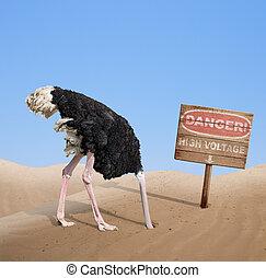 scared ostrich burying head in sand under danger sign -...