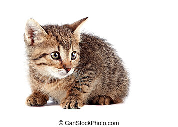 Scared striped kitten