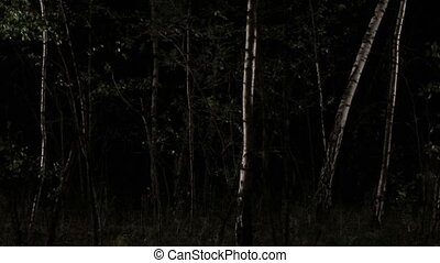Scared woman running through forest at night