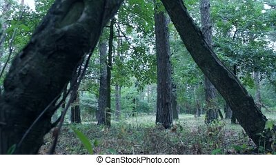 Scared young woman running through forest
