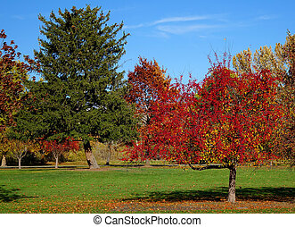 Scarlet Autumn Trees - Scarlet trees create a beautiful...