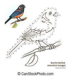 Scarlet bellied mountain tanager learn birds educational game learn to draw vector illustration
