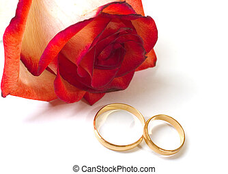 Scarlet fragile rose and two wedding rings on a white ...